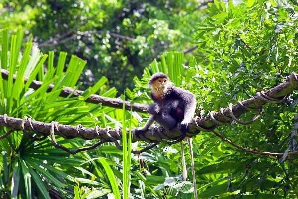 Bokor Station , The monkeys of Bokor , Cambodia