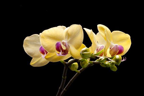 Bokor Station , Orchids of Bokor , Cambodia