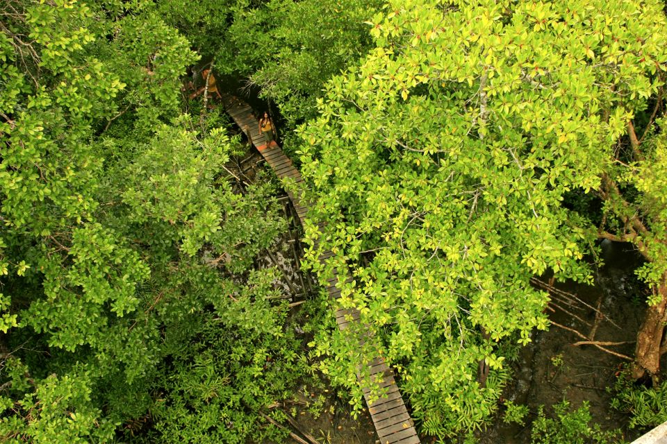 "Parc national de Preah Sihanouk ""Ream"" , La mangrove , Cambodge"