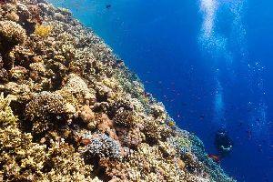 La plongée , République dominicaine