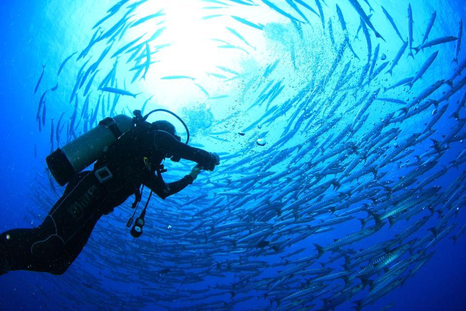 La plongée , Plongeurs sur le départ , République dominicaine