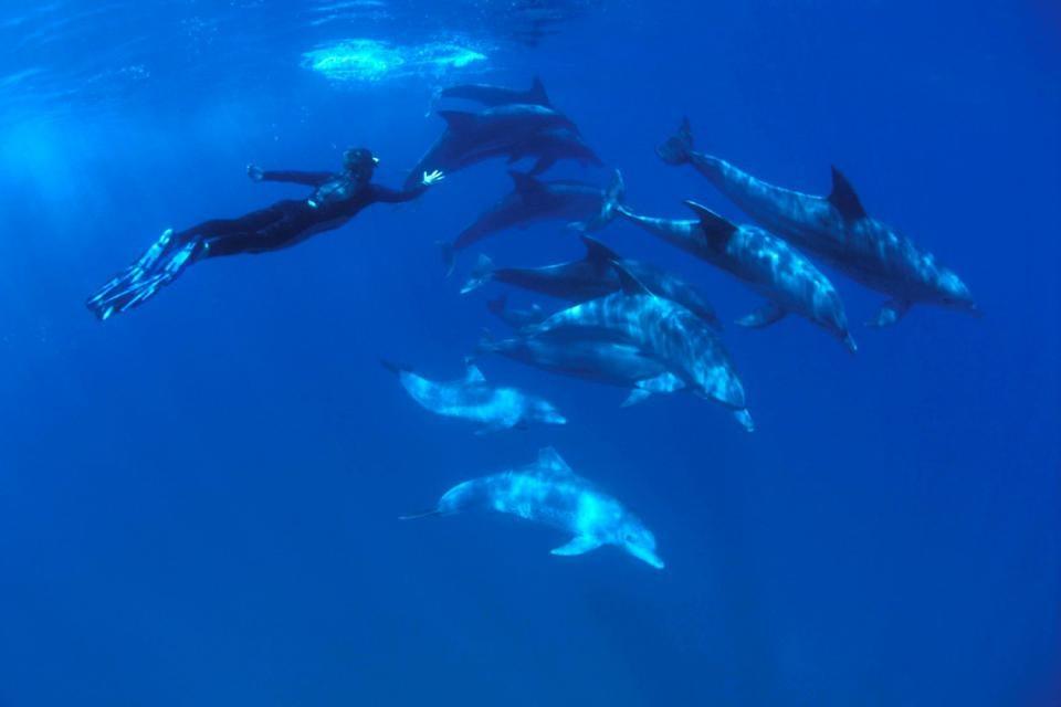 La plongée , Plongée avec un dauphin , République dominicaine