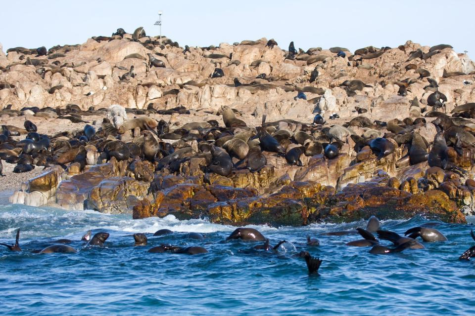 La gabbia degli squali , Lo squalo: una specie minacciata , Sudafrica