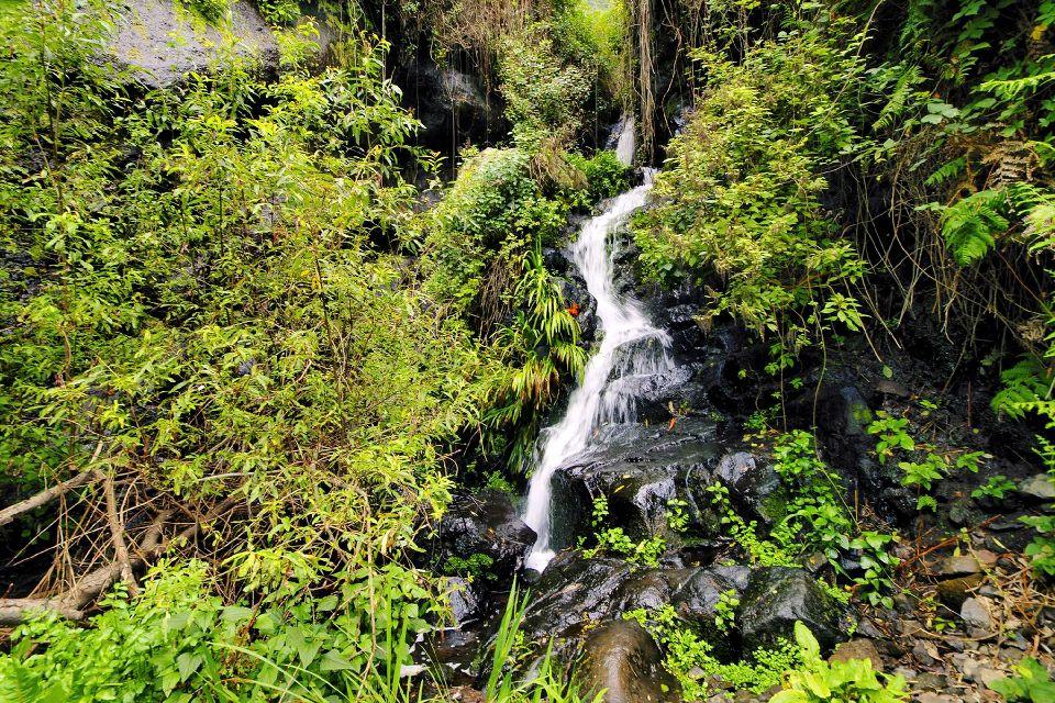 La Gomera , Le parc national de Garajonay , 10 % de la surface de La Gomera , Espagne