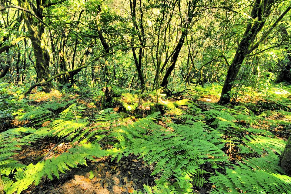 La Gomera , Le parc national de Garajonay , Un paradis pour les randonneurs , Espagne