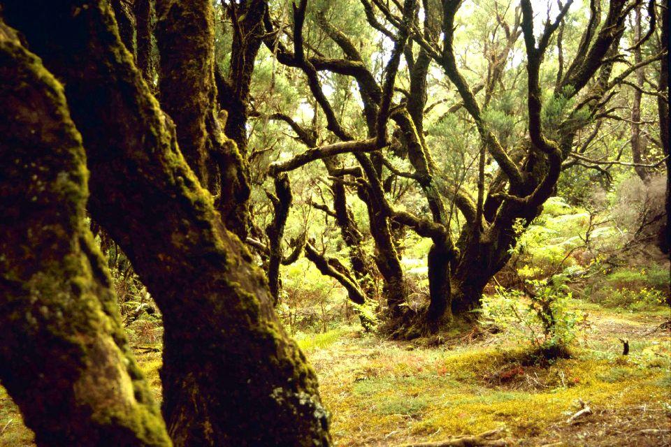 La Gomera , Le parc national de Garajonay , Une forêt exceptionnelle , Espagne