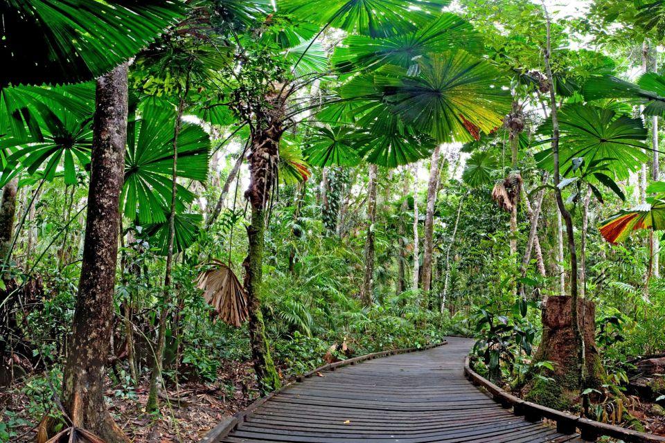 Daintree National Park, parcs, daintree, Australie, océanie, forêt tropicale, flore, végétation, unesco, patrimoine de l'Humanité