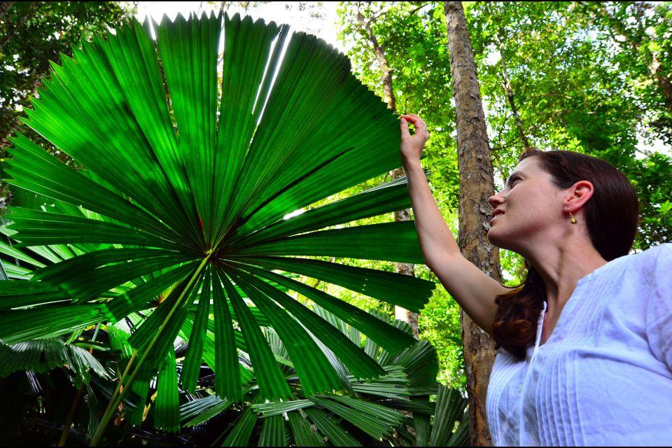Daintree National Park, parcs, daintree, Australie, océanie, forêt tropicale, flore, végétation, unesco, patrimoine de l'Humanité, femme