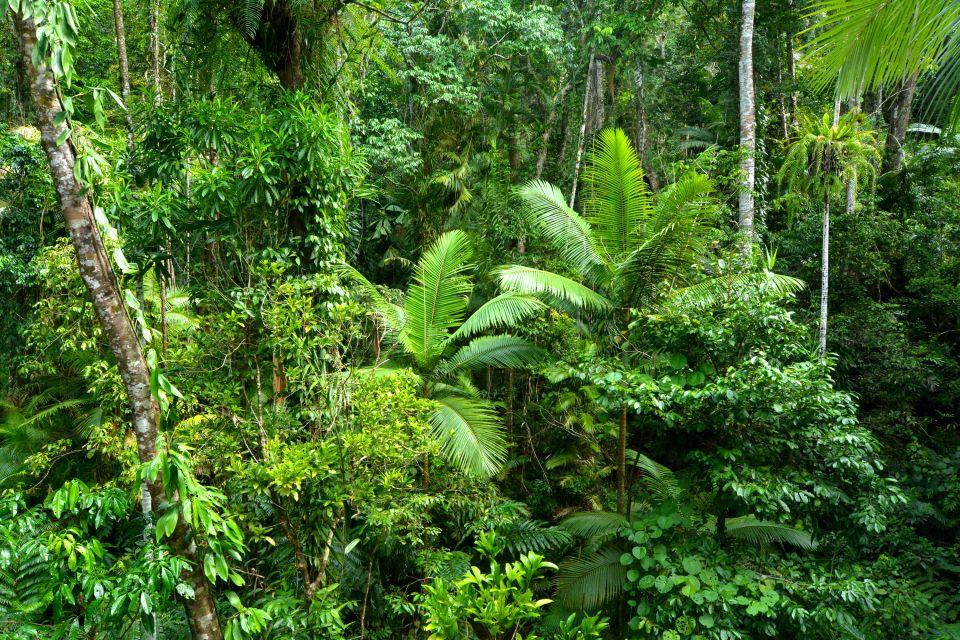gorges; Mossman, Daintree National Park, parcs, daintree, Australie, océanie, forêt tropicale, flore, végétation, unesco, patrimoine de l'Humanité