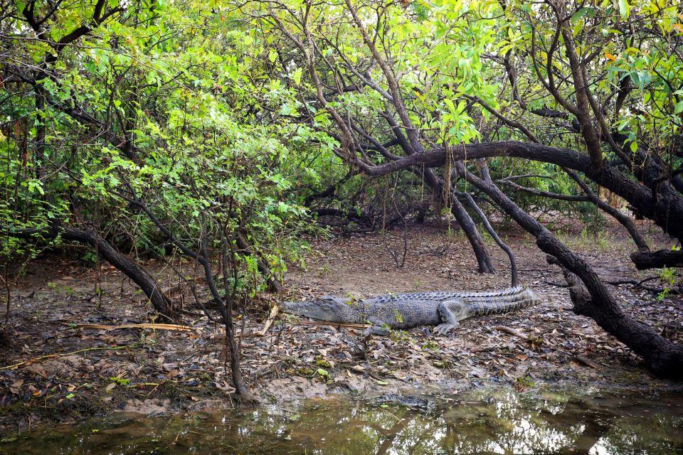 Daintree National Park, parcs, daintree, Australie, océanie, forêt tropicale, flore, végétation, unesco, patrimoine de l'Humanité, reptile, crocodile