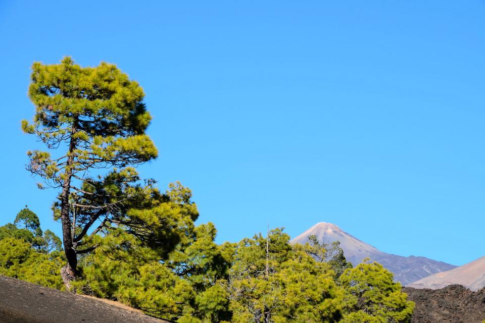 Teneriffa , Der Nationalpark von Corona Forestal , Der Naturpark Corona Forestal , Spanien