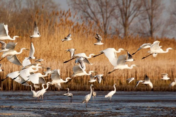 Birds of the Ebro, The birds of the Ebro Delta, The fauna and flora, Catalonia