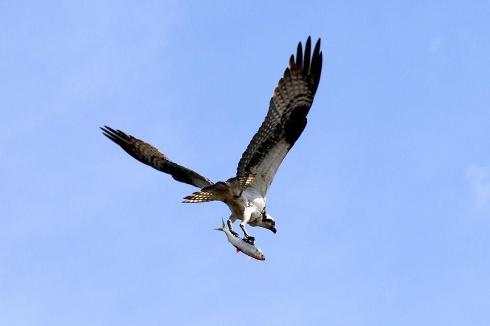 Una infinidad de aves de todo tipo, Las aves del Delta del Ebro, Fauna y flora, Cataluña