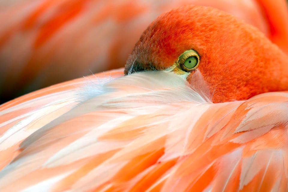 Las aves del Delta del Ebro , España