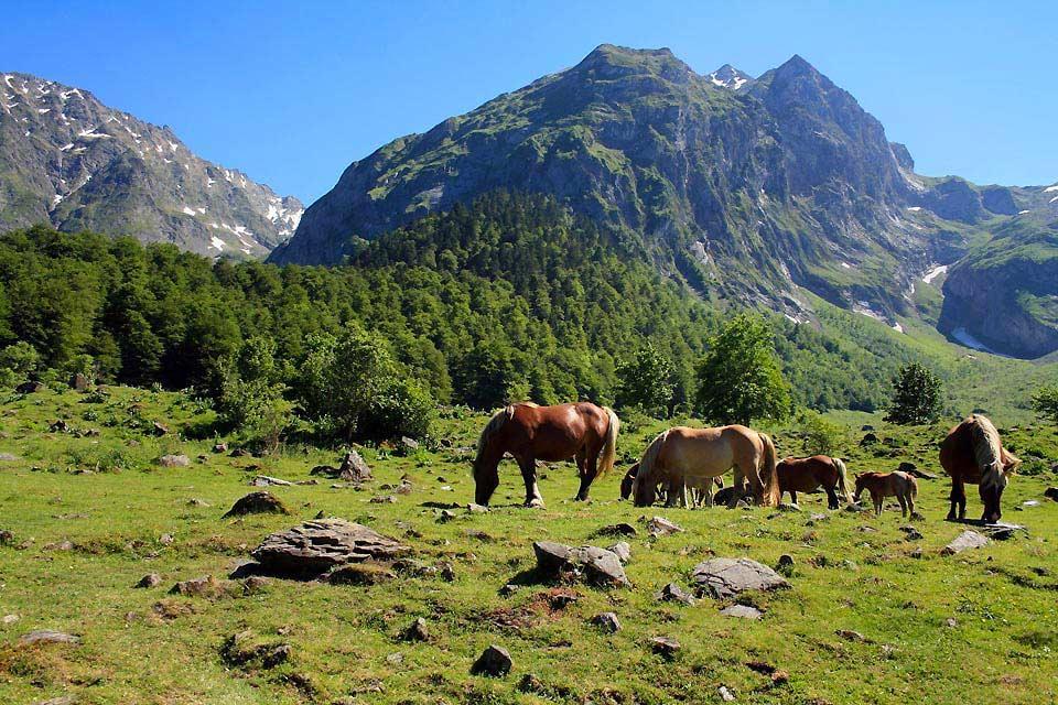 Val d'Aràn , Spanien