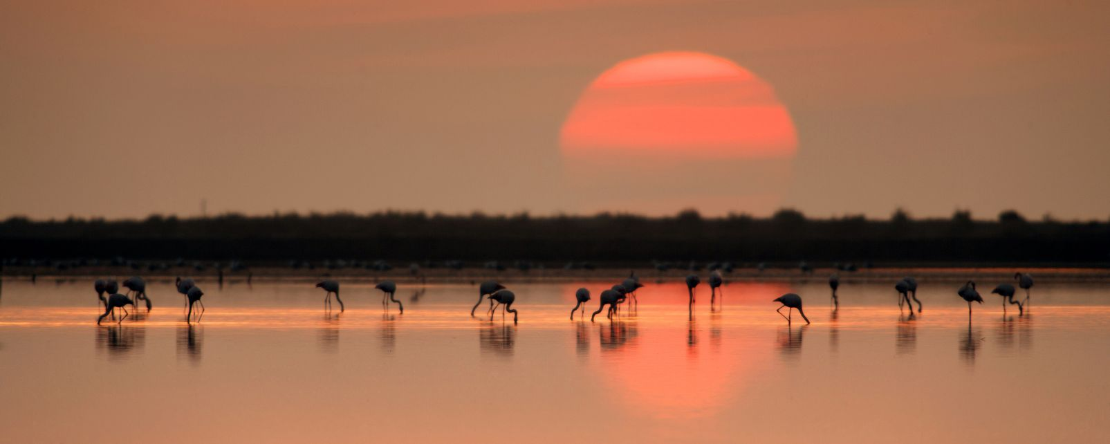 Les paysages, delta, èbre, catalogne, biosphère, espagne, oiseau, faune, animal, flamand