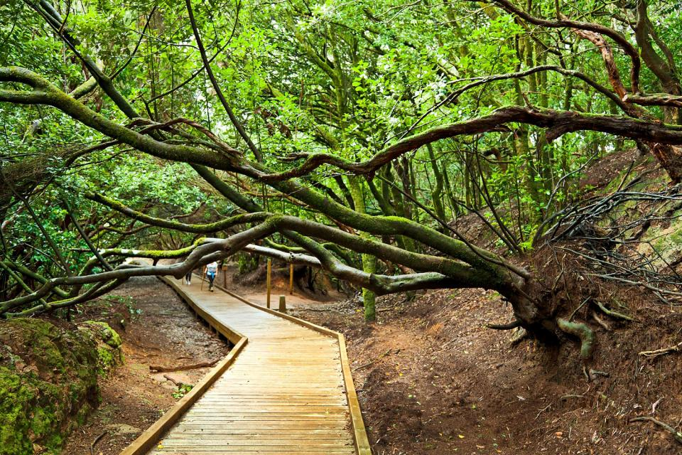 Teneriffa , Der Landpark von Anaga , Eine kurvige Straße , Spanien