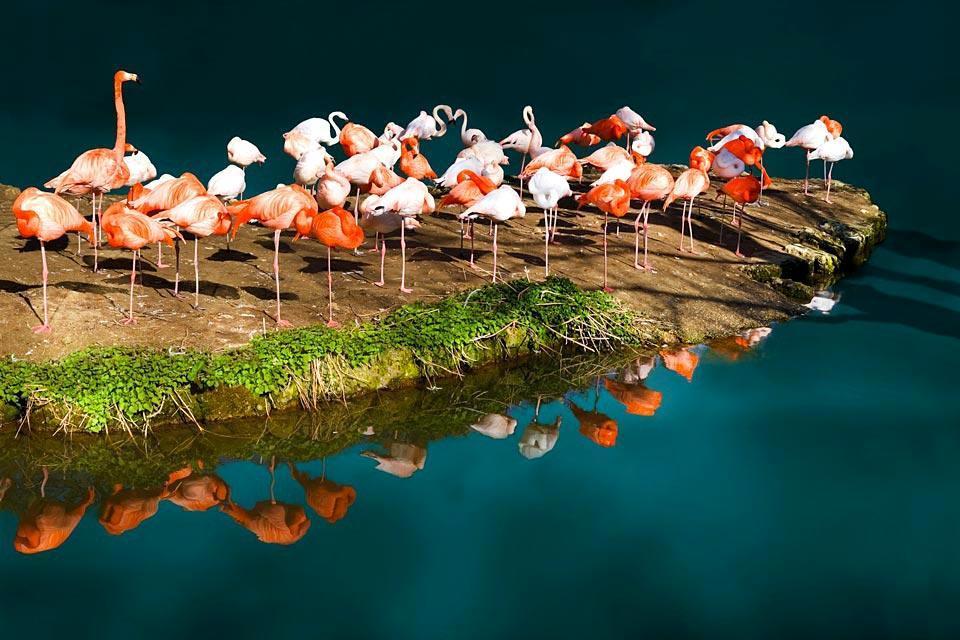 Der Waza-Nationalpark , Kamerun
