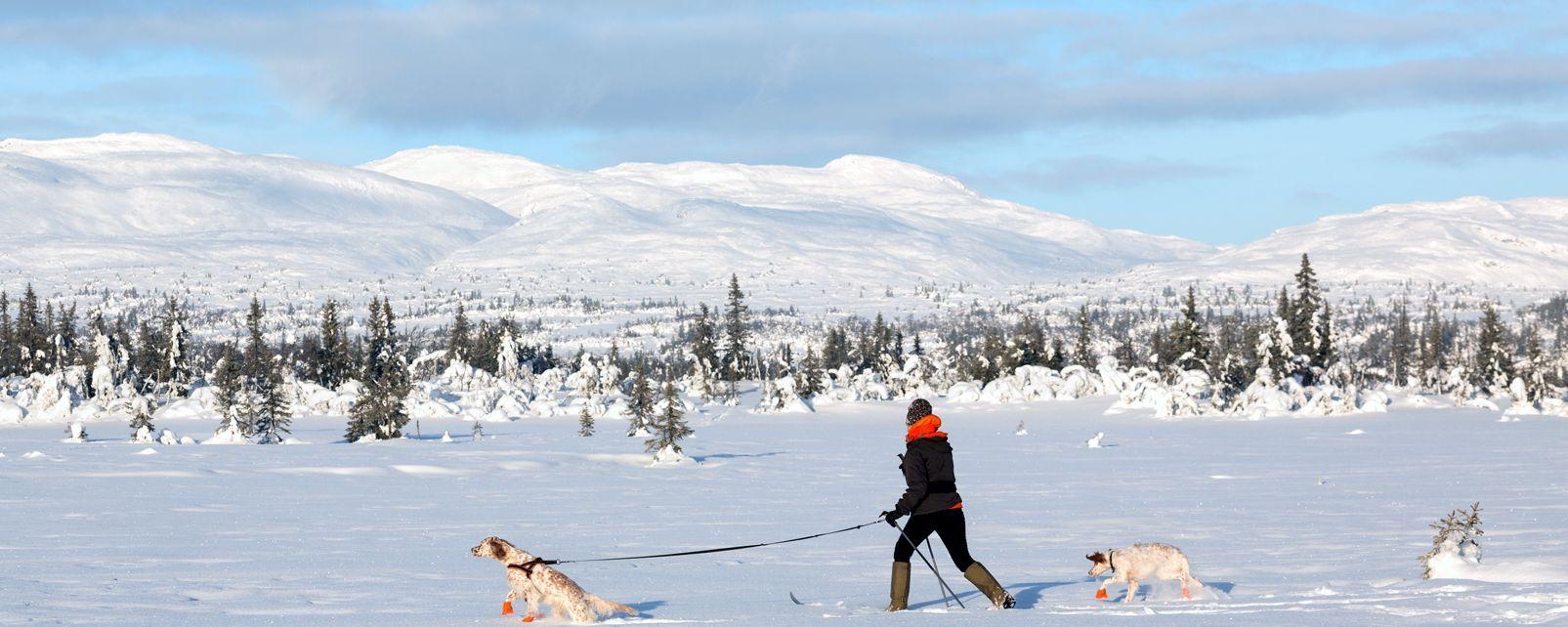 Les activités et les loisirs, ski, sport, norvège, scandinavie, glisse, oppland, Synnfjell, ski nordique, ski de fond
