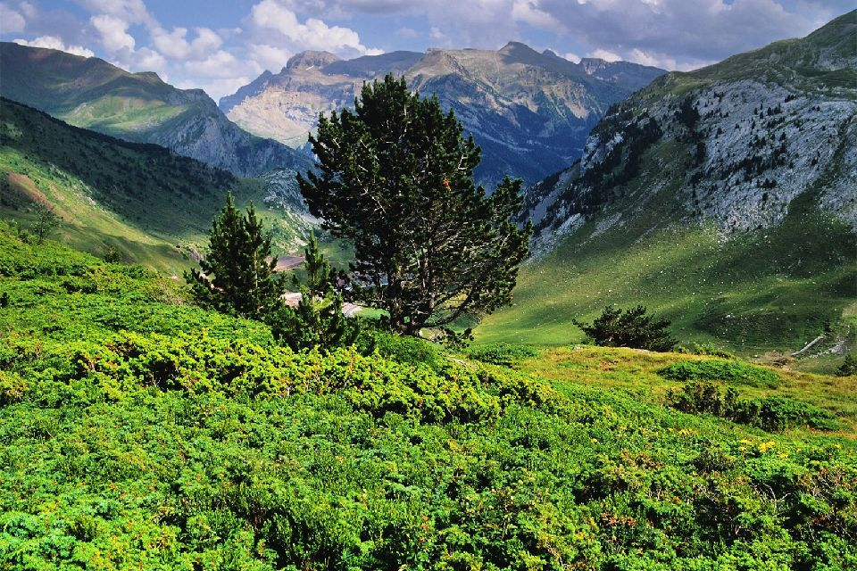 La flore de Gavarnie , Le Parc national des Pyrénées , France