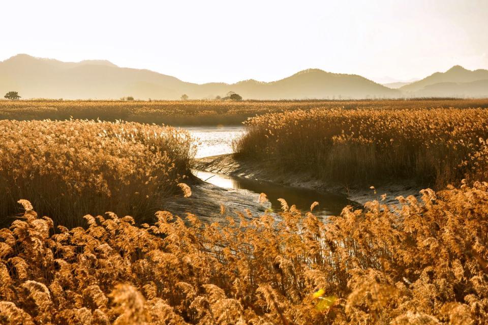 La baia di Suncheonman , Corea del Sud