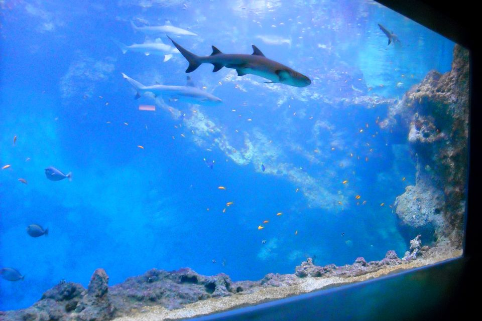 Aquarium du grand Lyon , The shark pit , France