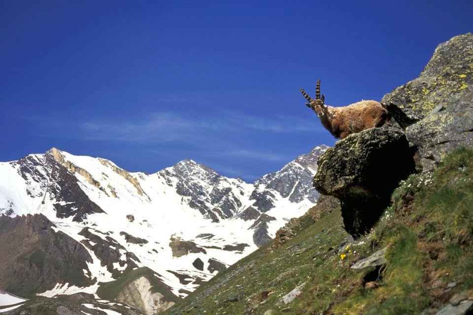 Parc naturel régional du Vercors , Bouquetin des hauts plateaux , France