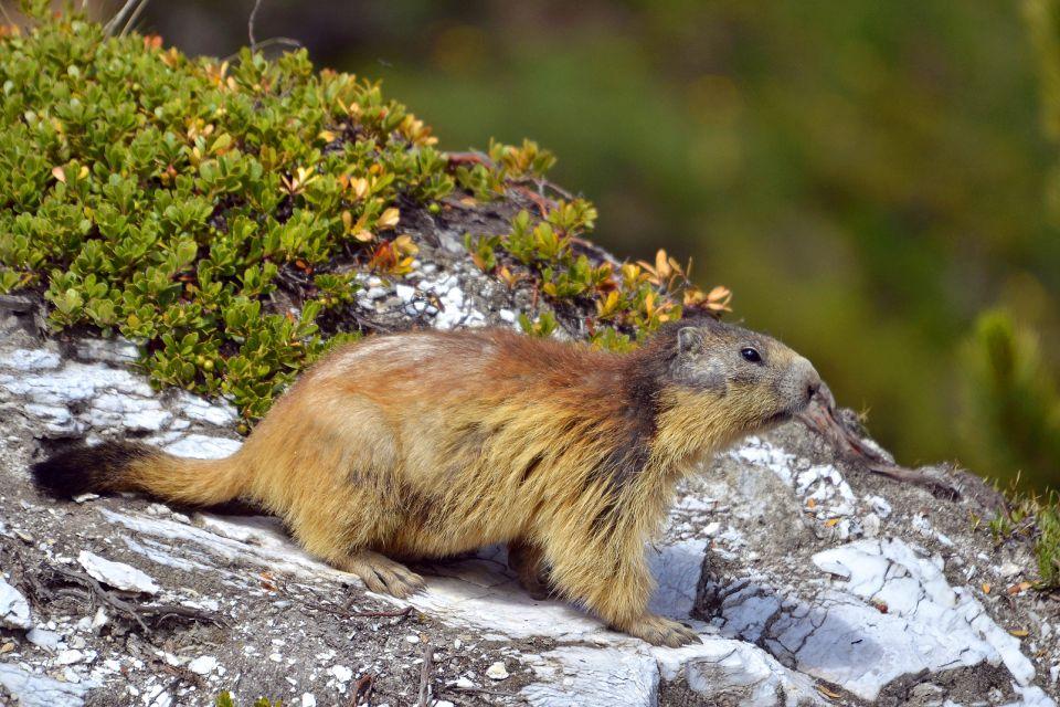 Parque Nacional Regional de Vercors , La fauna del Vercors , Francia