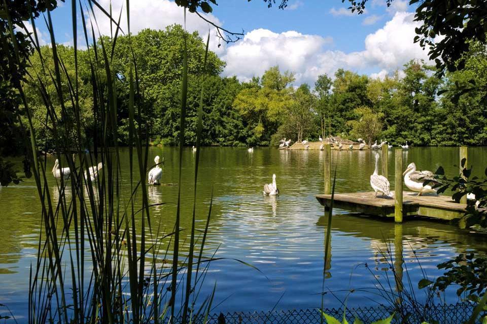Parc des oiseaux rh ne alpes france for Oiseaux de france