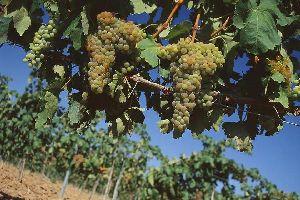 Les vignes du Prieuré , Espagne