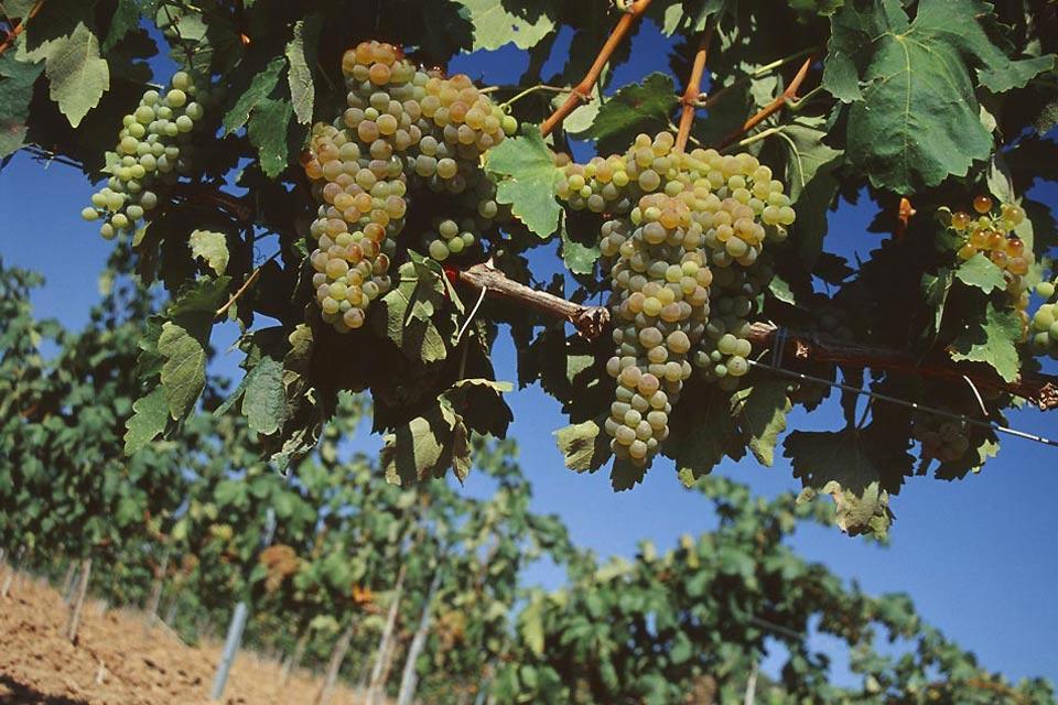 Las viñas del Priorato , Spain