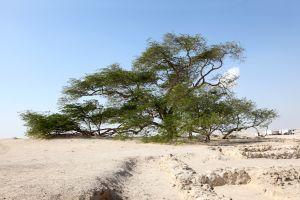 Les paysages, bahreïn, arabie, moyen-orient, arbre, désert, golfe, royaume, flore, végétation, nature