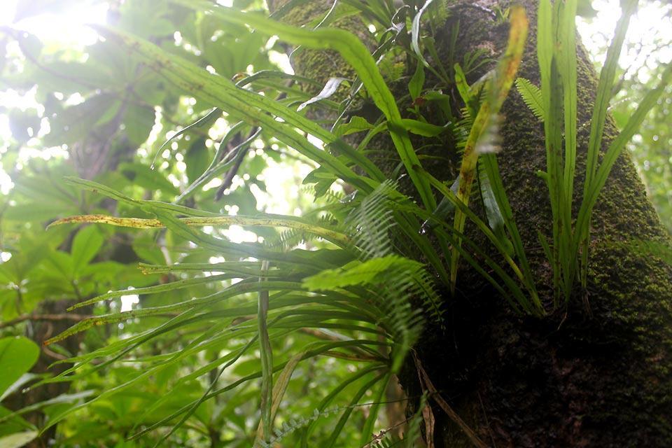 Vermont Nature Centre , St. Vincent jungle , Saint-Vincent and The Grenadines