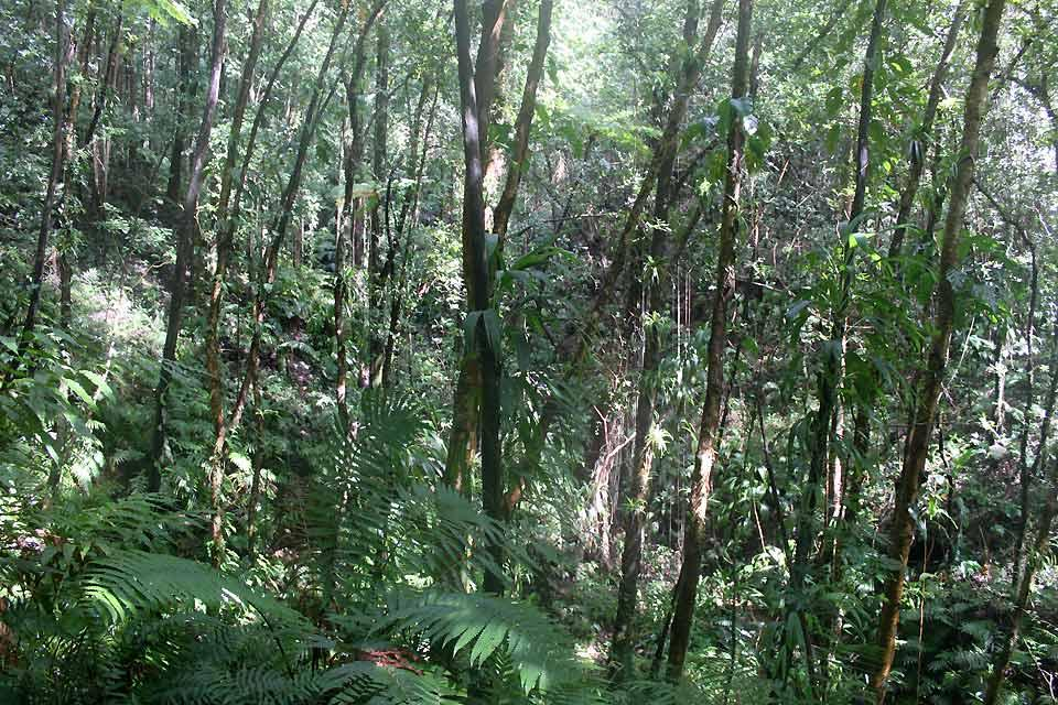 Vermont Nature Centre , A walk in the forest , Saint-Vincent and The Grenadines