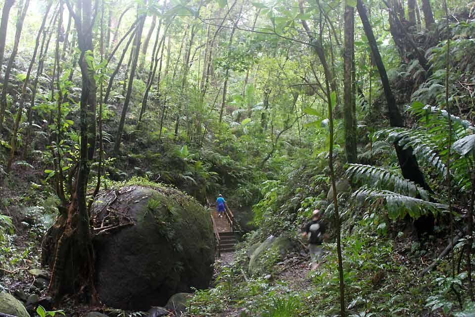 Vermont Nature Centre , Discovering the jungle , Saint-Vincent and The Grenadines
