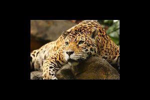 Parc zoologique et botanique des Mamelles , Le parc zoologique et botanique des Mamelles , Guadeloupe