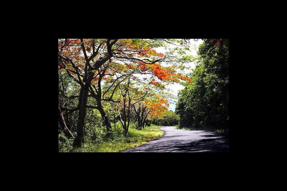 Parc zoologique et botanique des Mamelles , Promenade au parc des Mamelles , Guadeloupe