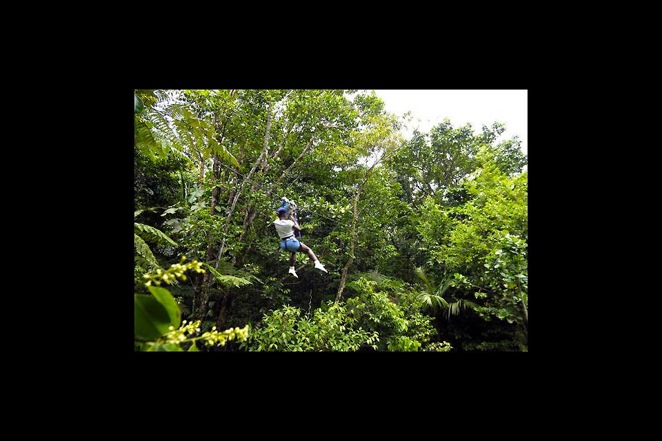 The botanical and zoological gardens of Mamelles , Tree climbing in Mamelles park , Guadelupe
