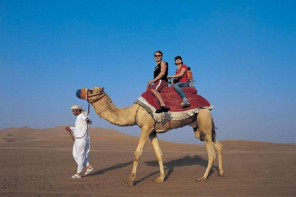 Sharjahs Aktivitäten , Dromedare in Schardscha , Dubai und die Emirate