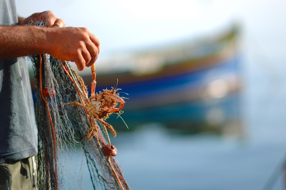 Fishing , Marsaxlokk, Malta , Malta