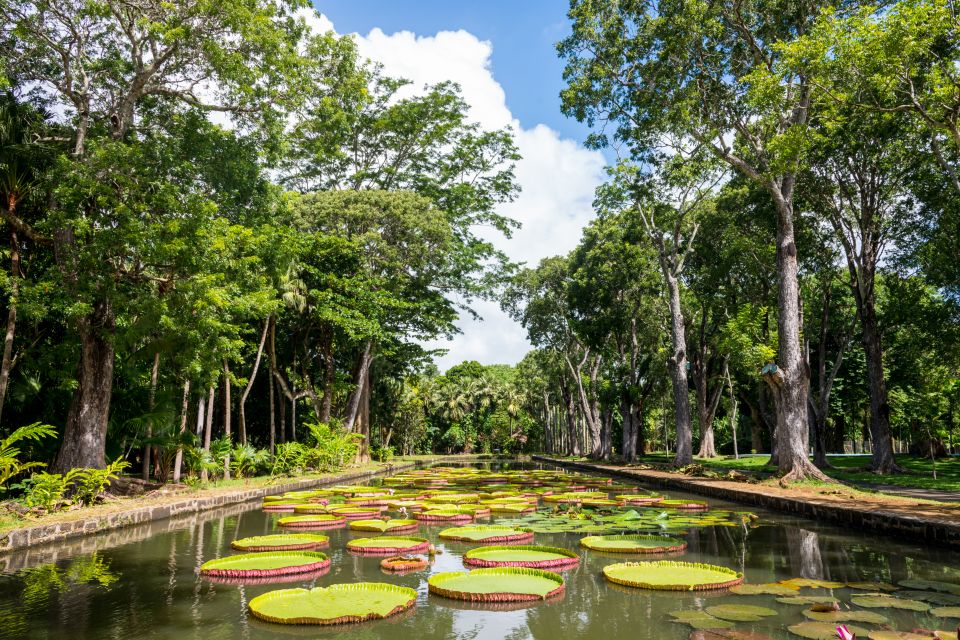 Il giardino di Pamplemousse, Il giardino di Pamplemousses, La flora, Grand Baie, Isola Mauritius