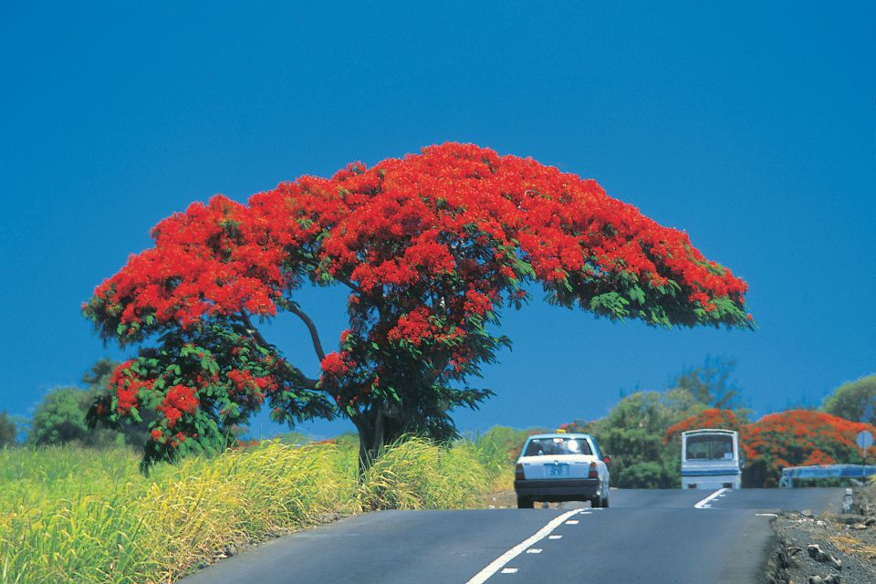 Mauritius' trees, The trees of Mauritius, The flora, Mauritius