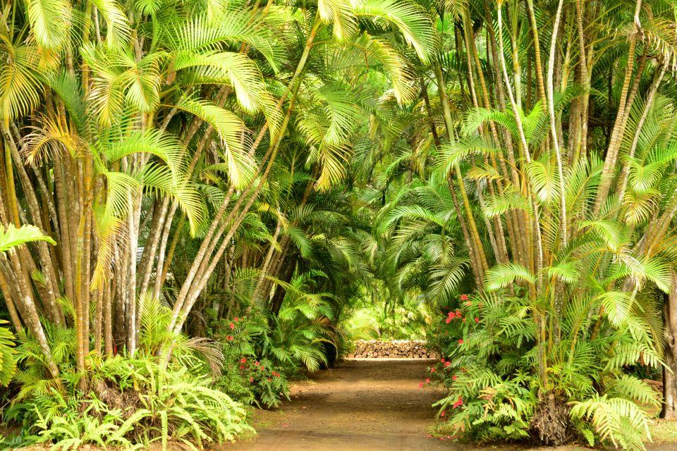 Coconut trees, Mauritius, The trees of Mauritius, The flora, Mauritius