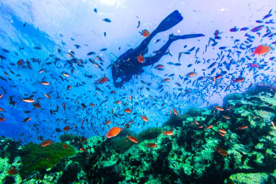 Koh Tao , Scuba diving in Koh Tao , Thailand