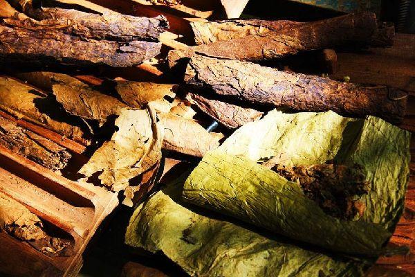 Los puros , Rodillos de puros , República Dominicana