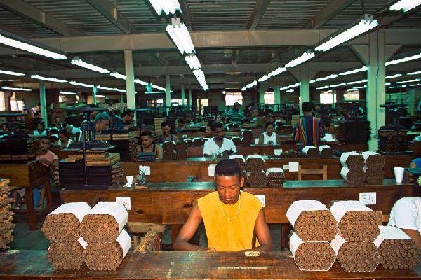 Los puros , La fábrica , República Dominicana