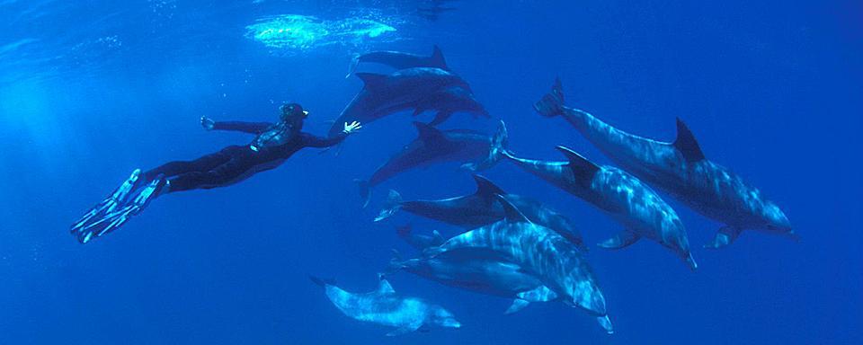 Nager avec les dauphins r publique dominicaine for Nager avec les dauphins nice