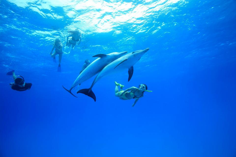 Swimming with the dolphins , Swimming with dolphins , Dominican Republic
