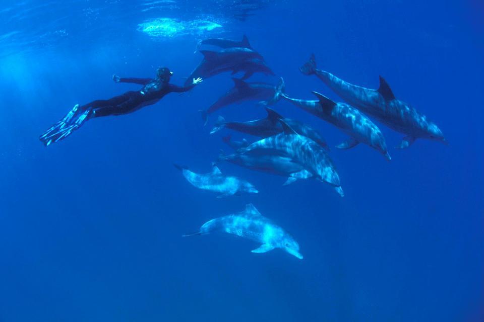 Nadar con delfines , Bucear con delfines , República Dominicana