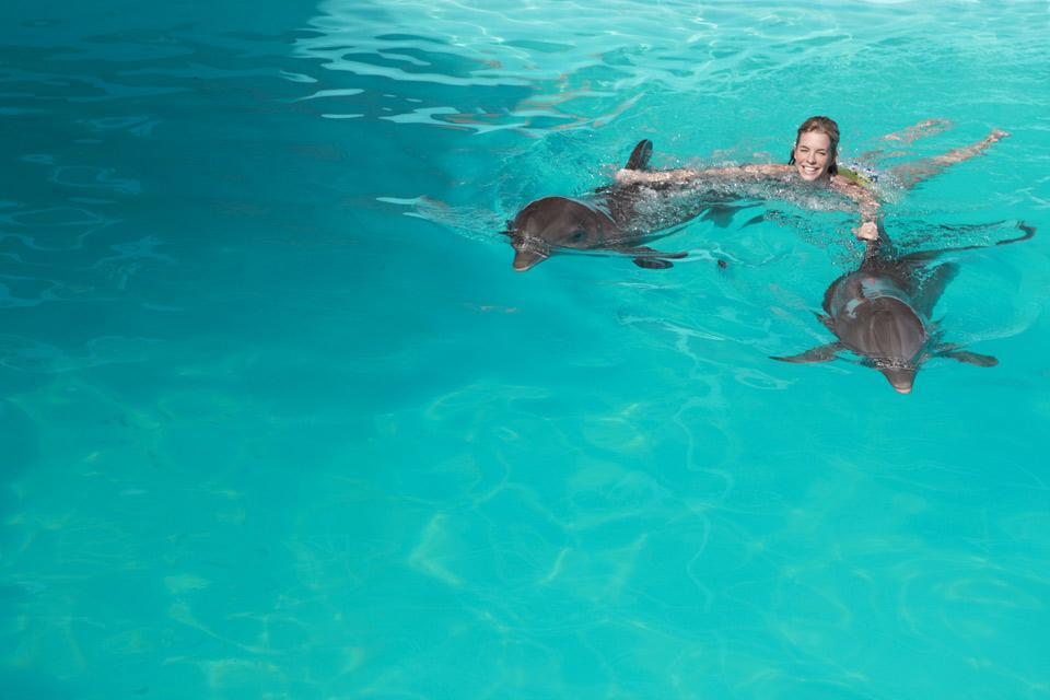 Swimming with the dolphins , Acrobatic numbers , Dominican Republic